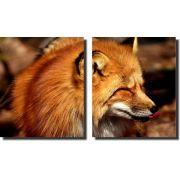 Quadro Decorativos Raposa Fox Varias Peças Para Sala