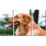 Quadro Decorativo Cachorro Golden Retriever 3 Peças