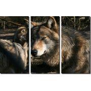 Quadro Decorativo Lobo 3 peças