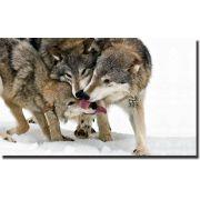 Quadro Decorativo Lobos na Neve 1 peça