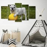 Quadro decorativo para quartos e salas cachorrinho branco 5 peças