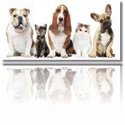 Quadros Decorativos Dogs Para Pet Shop 1 peça