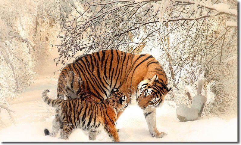 Quadro decorativo tigre na neve para quarto e sala 1 peça