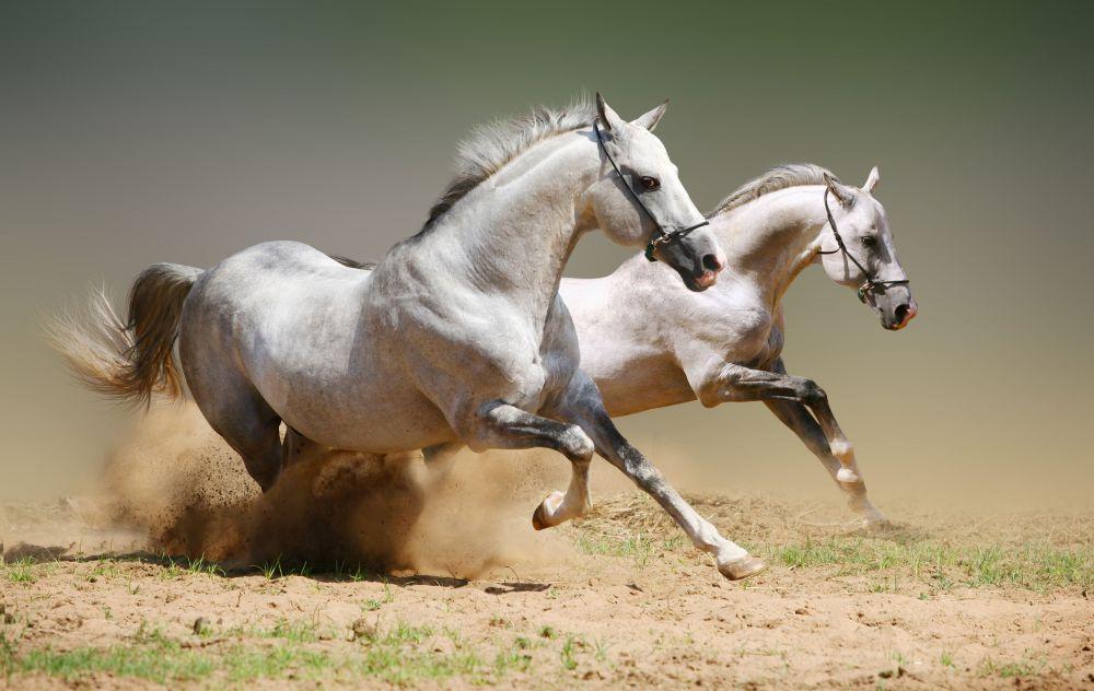 papel parede cavalo