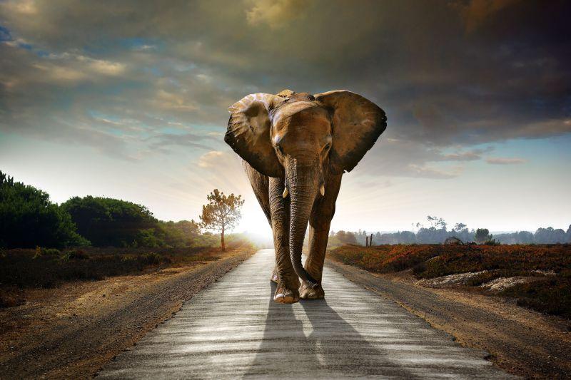 Papel Parede Elefante África
