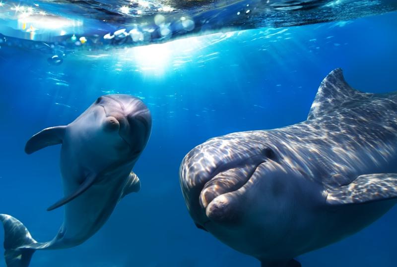 Papel de Parede Adesivo Golfinhos 3D Para Sala