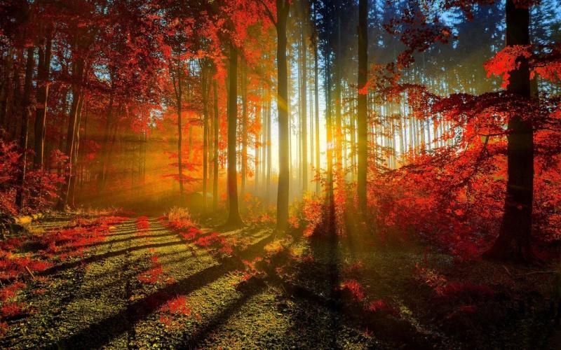 Papel de Parede Paisagem Floresta Vermelha Para Sala