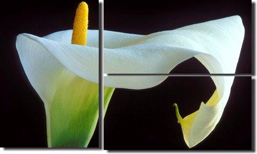 Quadro Decorativo Flor Copo De Leite 3 Peças Para Salas