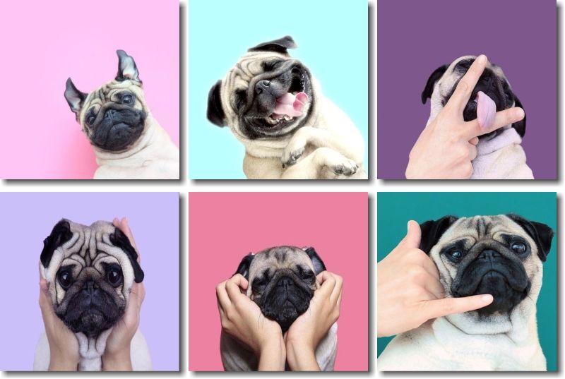 Kit Quadros Decorativos Para Quarto Cachorrinhos Engraçado