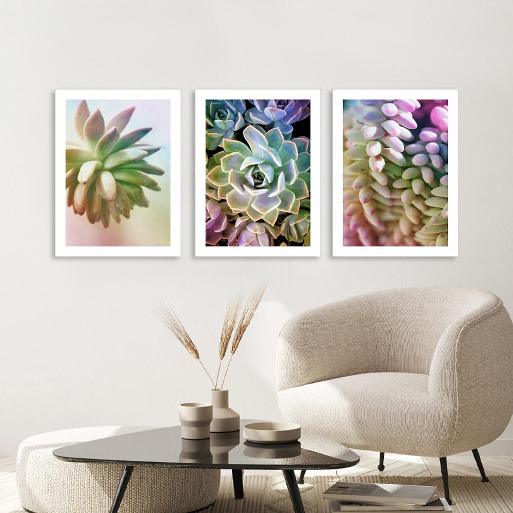Kit Quadros Decorativos Suculentas Coloridas