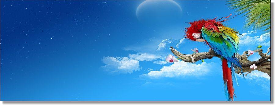 Quadro decorativo Céu e Arara