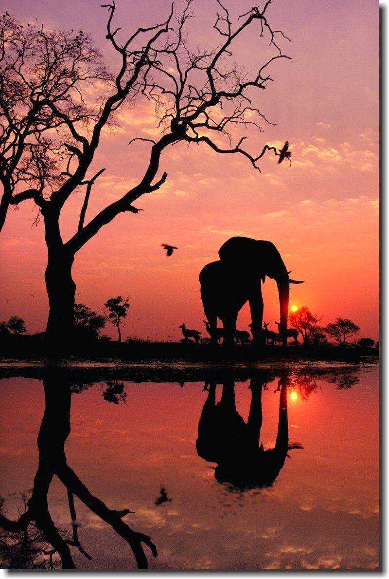 Quadro Decorativo Elefante África 1 peça