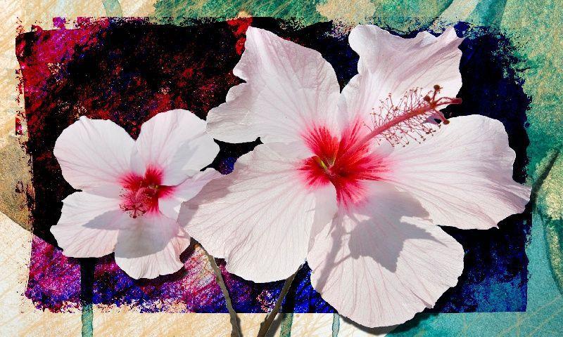 Quadro Decorativo Flor Branca para sala 1 peça