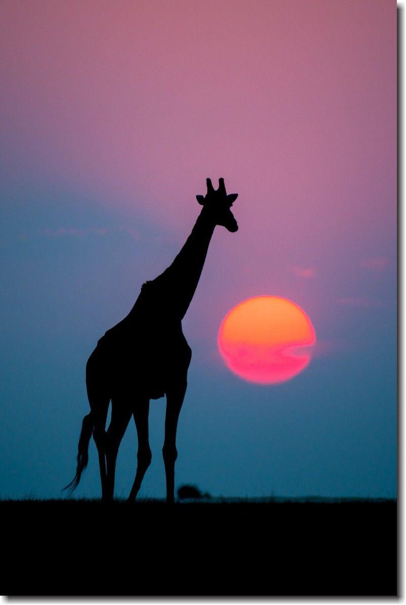 Quadro Decorativo Girafa Africa 1 peça
