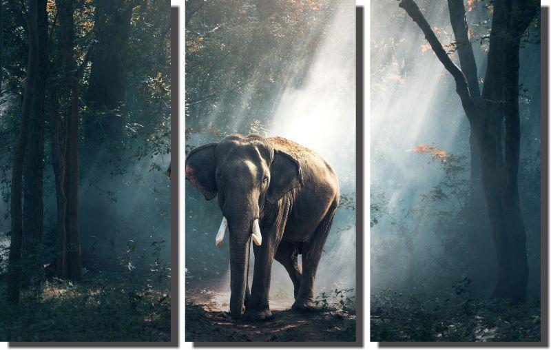 Quadros Decorativos Elefante Africano para Sala 3 peças