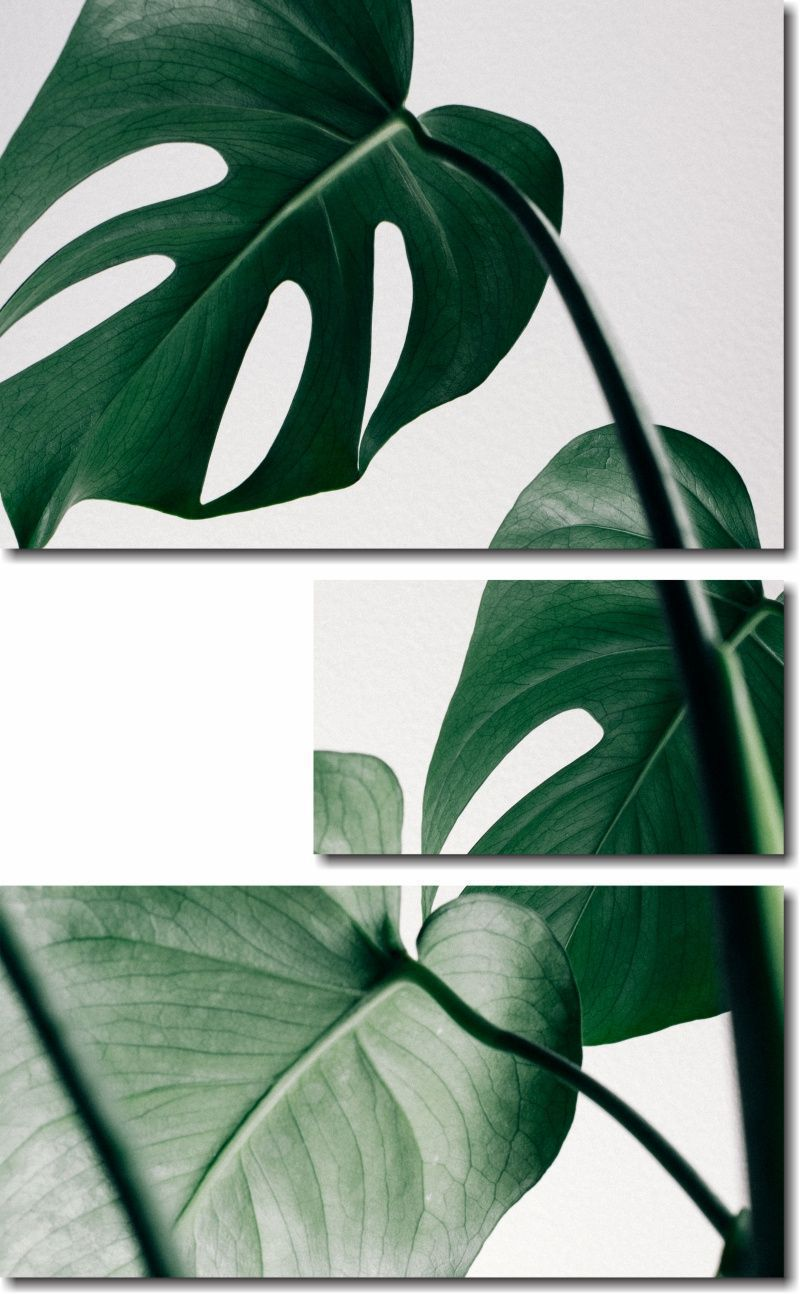 Quadros Decorativos Planta Costela-de-Adão 3 peças