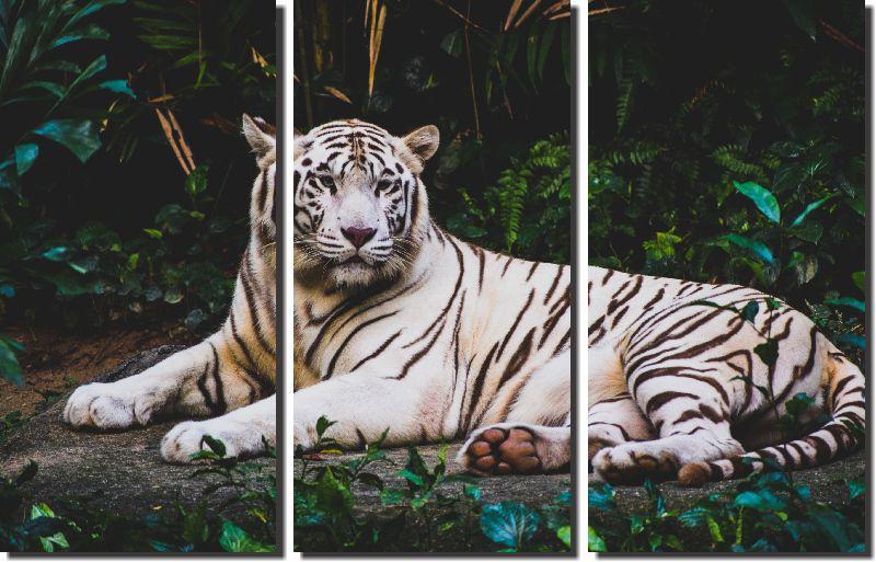 Quadros Decorativos Tigre Branco 3 peças