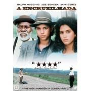 DVD A ENCRUZILHADA (CROSSROADS)