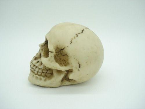 Enfeite Caveira Crânio  - Presente Presente