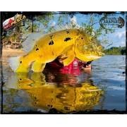 Pacote de Pesca Rio Trombetas - Oriximiná - Pará