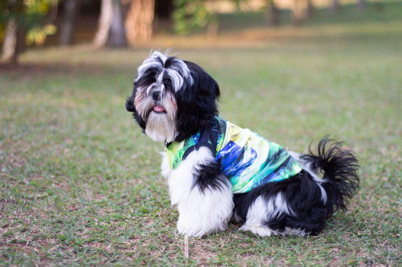 Roupinha Pet - Estampa Brasil  - Vivian Bógus