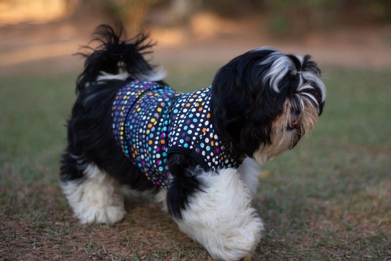 Roupinha Pet - Estampa pontinhos  - Vivian Bógus