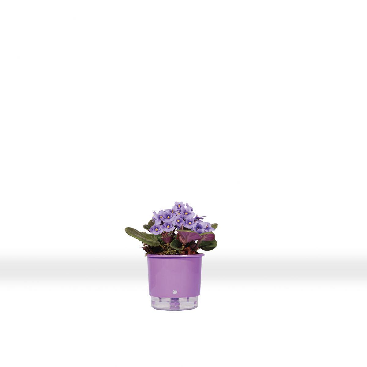 Vaso autoirrigável Raiz MINI 10,5 cm X 9 cm