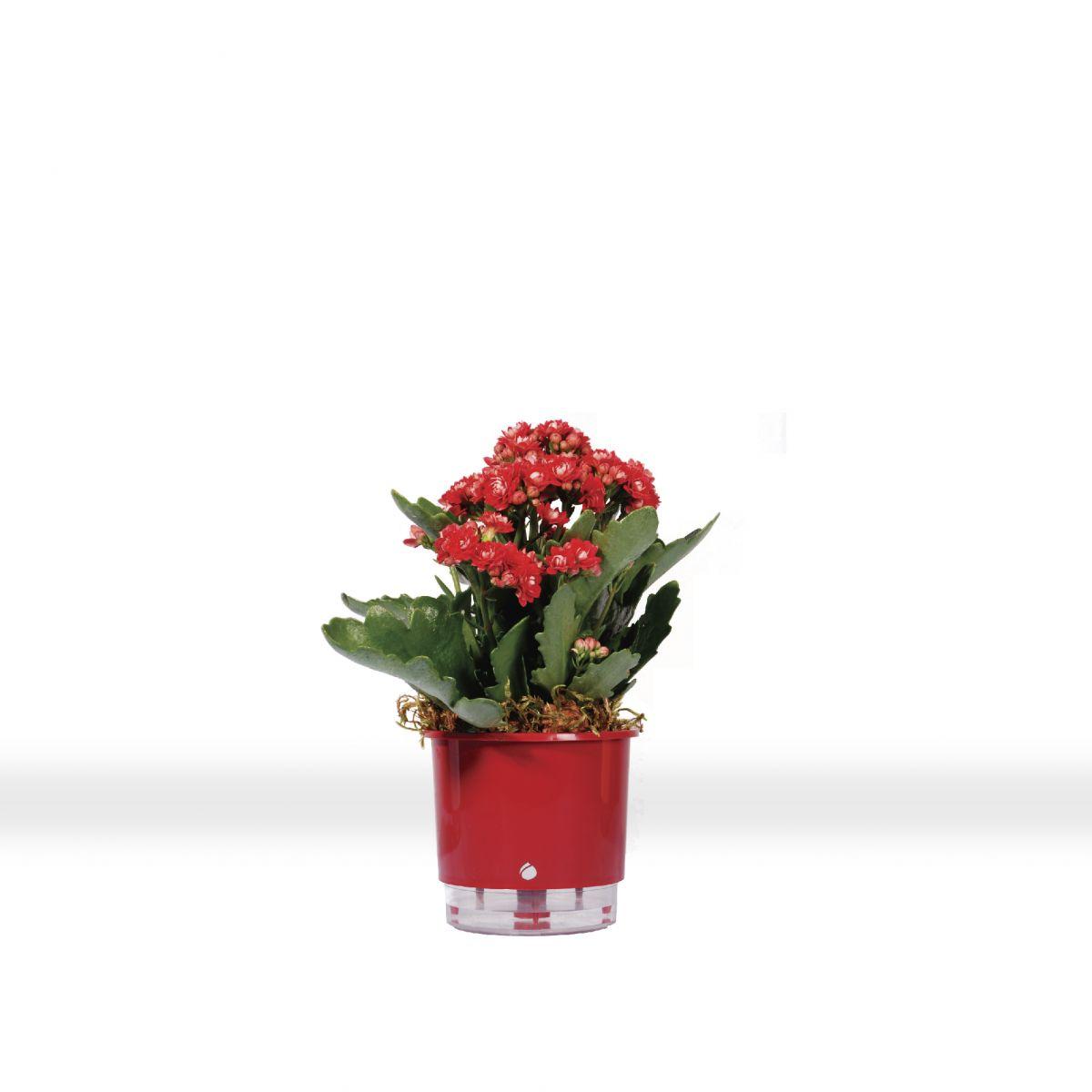 Vaso autoirrigável Raiz PEQUENO 12 cm X 11 cm