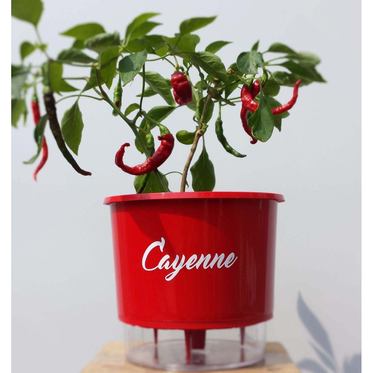 Vaso com reservatório de água (autoirrigável) Médio Vermelho Linha Pimentas 16 cm x 14 cm
