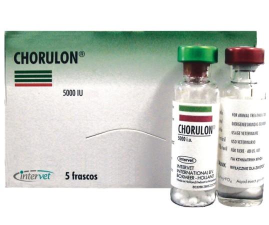 Chorulon 5000 UI - 1 amp  - Farmácia do Cavalo