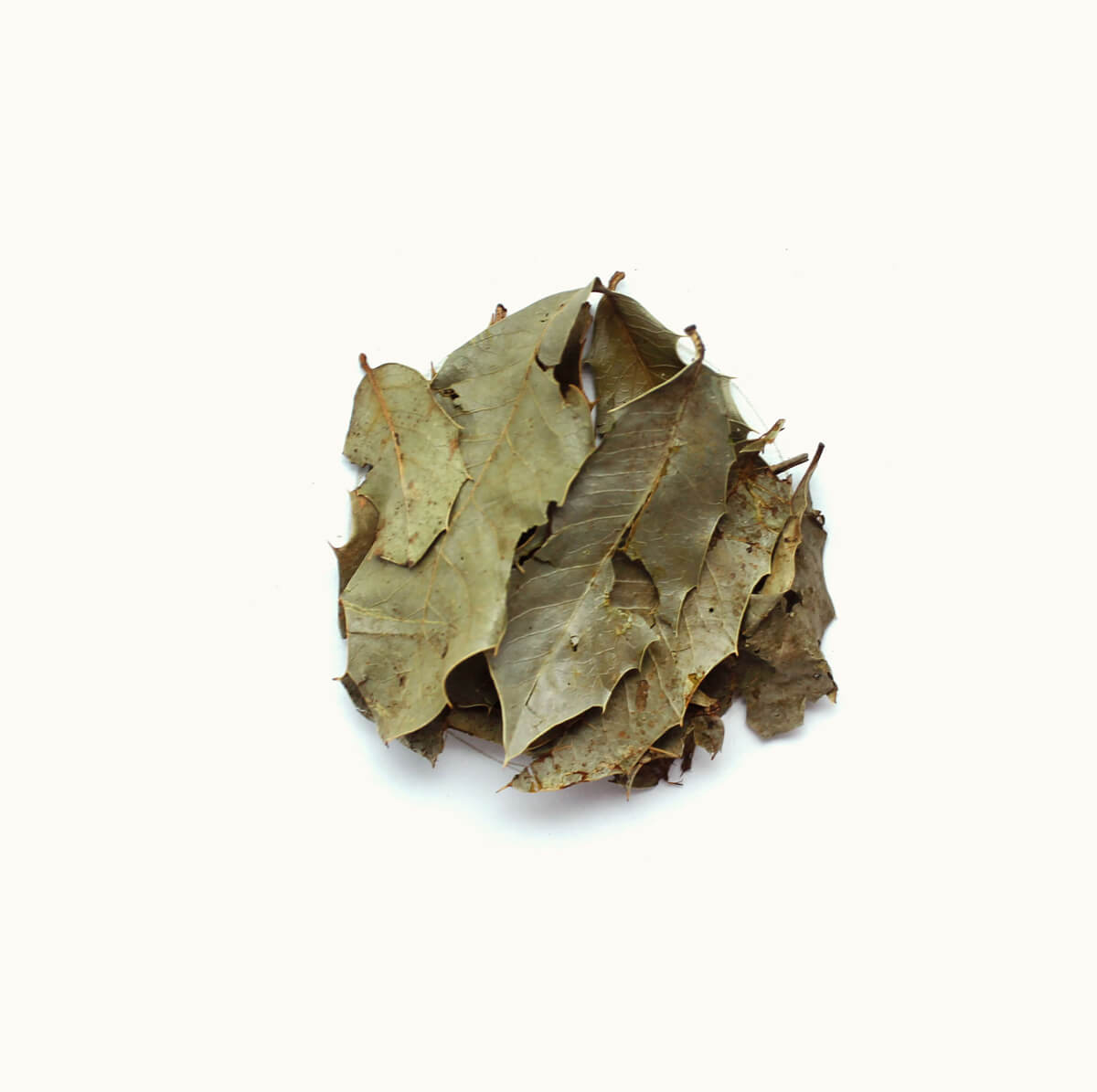 ESPINHEIRA SANTA - Maytenus ilicifolia - 20g