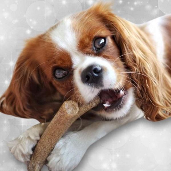 Antler Wood Sabor Defumado Queijo   - BOUTIQUE DO DOG