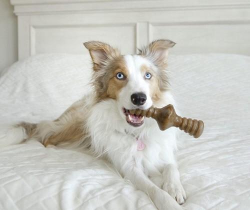 Benebone Zaggler Bacon  - Boutique Do Dog