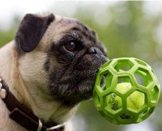 Bola Telada Mini, P, G  - Do Dog