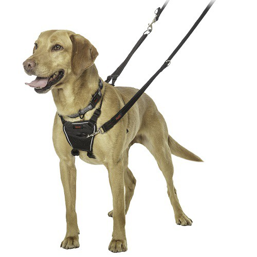 Peitoral No Pull Harness  - Boutique Do Dog