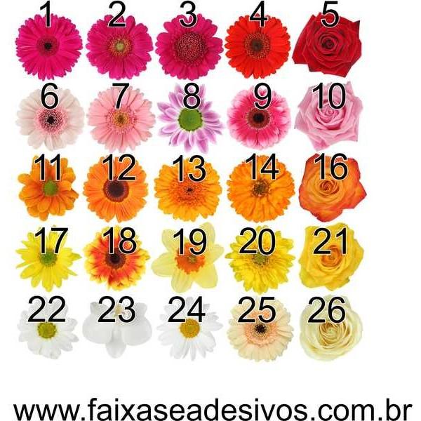 Cartela de Flores New P - adesivos com 68 flores iguais - Escolha a sua  - Fac Signs