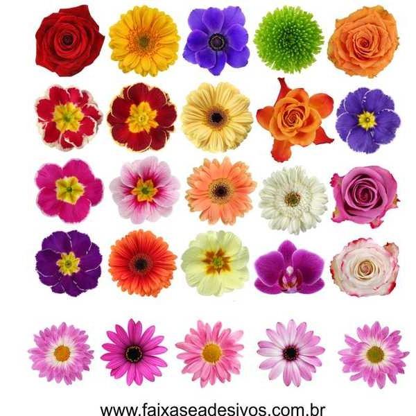 Cartela de Flores New M - adesivo com  66 flores - Escolha a sua  - Fac Signs