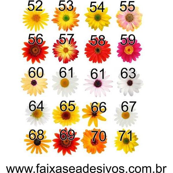 Cartela de Flores New G - adesivo com 53 flores iguais - escolha sua  - FAC Signs Impressão Digital