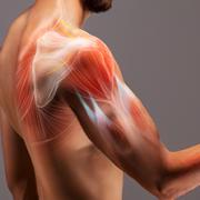 Recuperação funcional do ombro (Prof. Wagner Teixeira dos Santos)