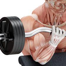 Potencializando os músculos para treinos (Luis Cláudio Bossi)  - Cursos distância e aulas online Instituto Phorte Educação.