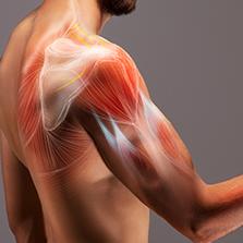 Recuperação funcional do ombro (Prof. Wagner Teixeira dos Santos)  - Cursos distância e aulas online Instituto Phorte Educação.