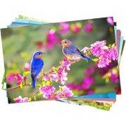 Papel Fotográfico A4 230g Glossy Branco Brilhante Resistente à Água / 20 folhas