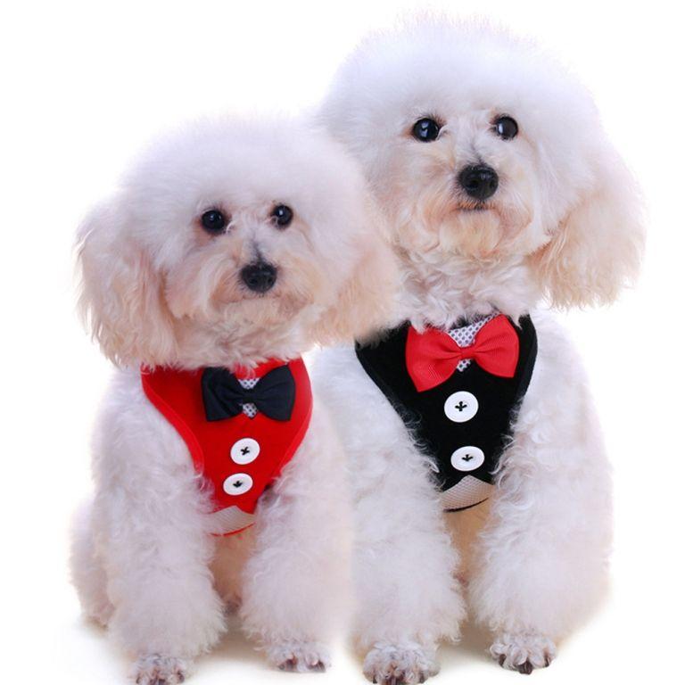 Colete Terno Smoking com Trela e Gravata Borboleta para Cachorro Filhote