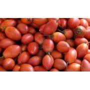 Sementes De Tamarillo Tomate De Árvore Tree Tomatoes