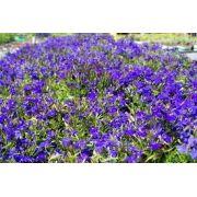 Sementes De Lobélia Azul Erinus 200 unidades Forração