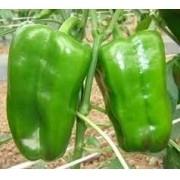 Sementes De Pimentão Verde Pimentões Pimento