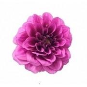 Bulbos De Dálias Dobradas Pink Gigante Flores Mudas De Jardim