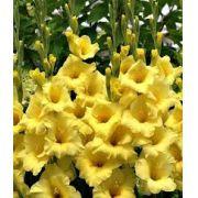 Bulbos De 04 Gladíolos Amarelos Palma Sta Rita -veja O Frete