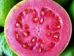 Sementes De Goiaba Vermelha e Goiaba Branca 15 unidades cadas Fruta  - BELLI PLANTAS