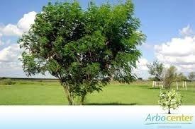 15 Tipos Sementes Pasto Apícolas Kit Abelhas Apis Meliponas  - BELLI PLANTAS